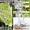 Ландшафтный дизайн и проектирование #401382