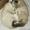 Отдам очень милых котят в хорошие руки #1189383