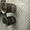 Антиквариат , Продам старинные вещи, , , Рестораторы обратите внимание, ,  #1491567